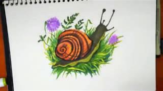 How to draw Snail (Làm thế nào để vẽ con ốc sên)