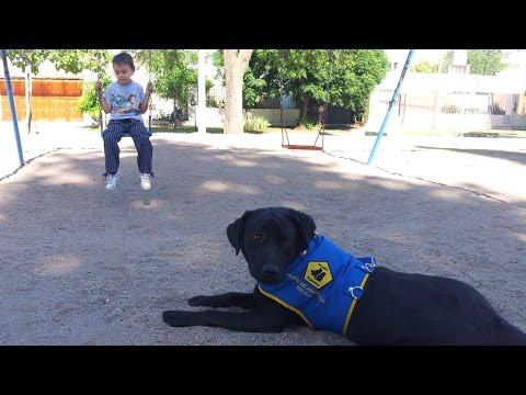 ¿Un perro puede cambiar la vida de un niño con autismo?