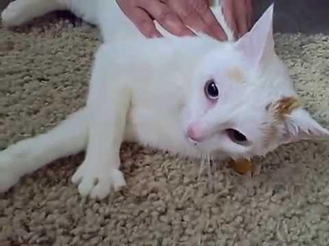 natural flea control cats