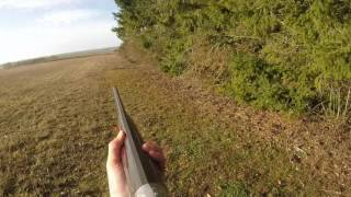Chasse Faisan-bécasse-lapin-pigeon et renard