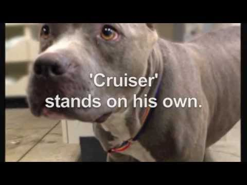 LA cops rescue abused dog...