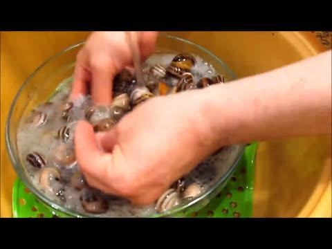 Cómo limpiar Caracoles