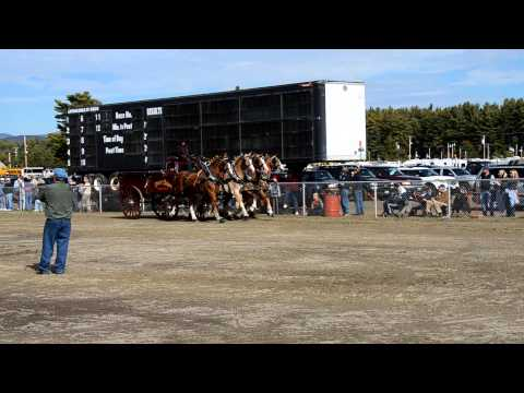 Fryeburg Fair - Four Horse Hitch
