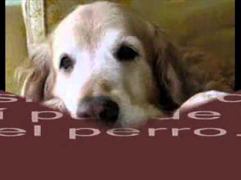 Cuando el perro es anciano