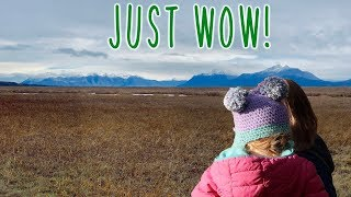 Exploring Palmer Hay Flats - Life in Alaska