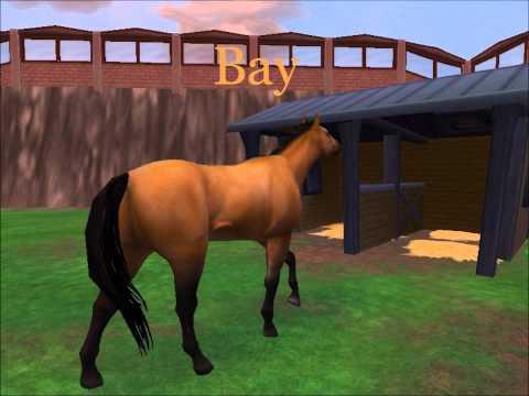 My Mustangs on Zoo Tycoon 2 *Please read description!*