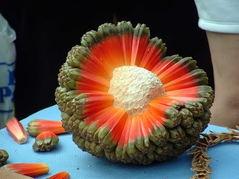 Top 10 Tropical Fruits You've Never Heard Of