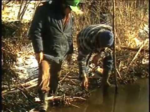 3. Добыча бобра 1 — Открытая вода (Eng)