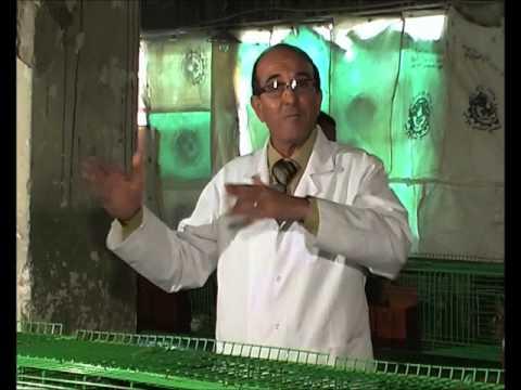 إرشادات سريعة عن تربية الأرانب، أ.د/ طارق سليمان، معلومه تهمك