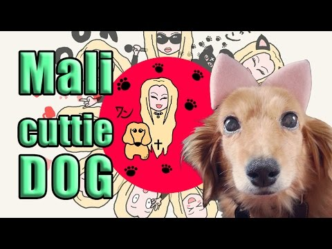 JELLY✞PEACH introduce Mali the Cuttie Dog