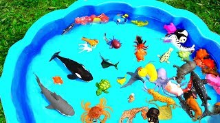 Learn Colors With Wild Zoo Animals In Blue Pool Water | Sharks For Kids