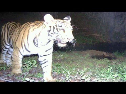 Wild Animals Hulchul in Adilabad Forest  - Watch Exclusive