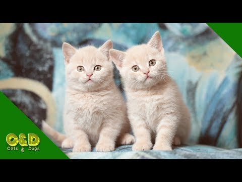 Cats And Dogs Funny Videos June 2019 – Cat and Dog Vines – Too Cute Funniest Pet Animals Compilation