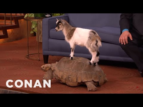 Animal Expert David Mizejewski: Capuchin Monkey, Caracal, Giant Tortoise & Goat  - CONAN on TBS