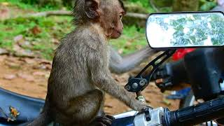 Oh Why Poor Baby Lori Like To Play On Moto Cycle ? Baby Lori Want To See Her Beaty Face On Mirror.