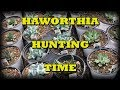HAWORTHIA HUNTING I Find A New Plant For My Succulent Collection Some Grow Care TIPS 2018 mp3
