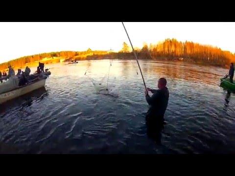 рыбалка на неве за володарским мостом