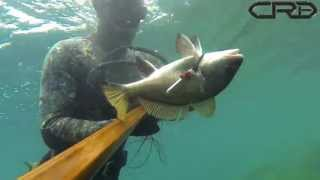 NEW SPEARFISHING VIDEO IN TRABZON TURKEY