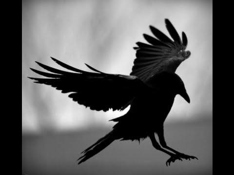 Inti-Illimani - Llego Volando
