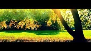 Watch Banda Limon Contigo video