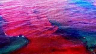 PROPHECY ALERT: Florida Coast Threatened Blood Red Water