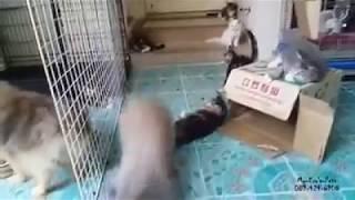 Conejo Se coge un gato