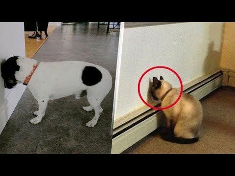 Eğer Evcil Hayvanını Bunu Yaparken Görürsen Hemen Yardım Çağır