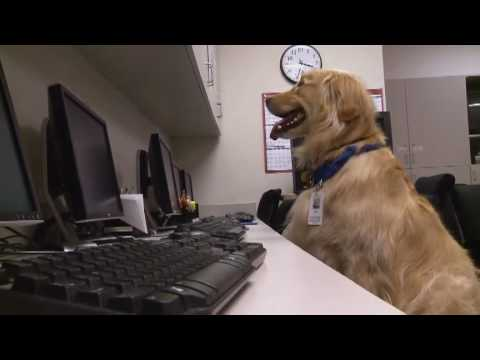 The Real Dog Therapists of Dallas | Episode 1