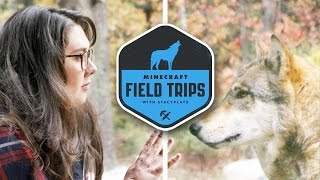 MEETING WOLVES - MINECRAFT FIELD TRIPS - THE MEGA TAIGA (EP.2)