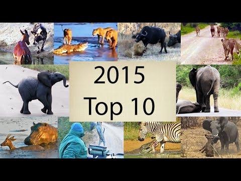 2015's Top 10 Wildlife Videos - Compilation
