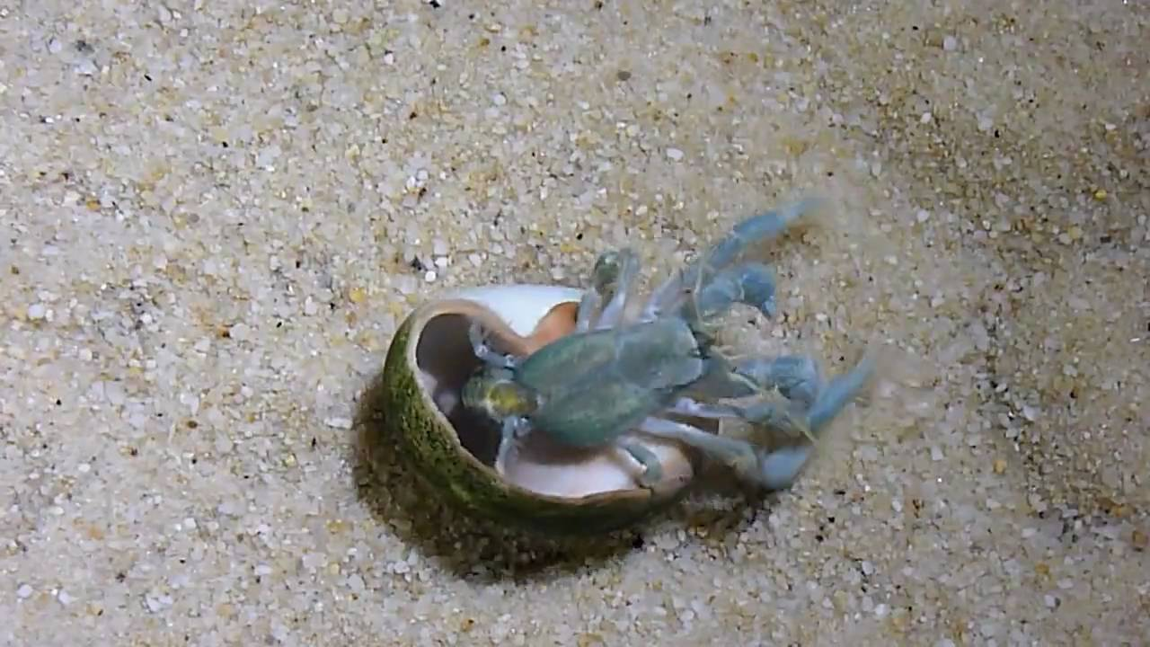 how to make sea salt water for hermit crabs