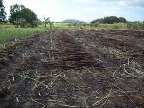 The 2011 Agricultural Marketing Movie(short edited)