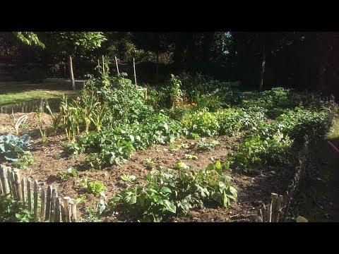 Gemüse anbauen im September und Rundgang