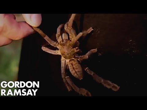 Download Lagu Gordon Ramsay Goes Tarantula Hunting in Cambodia MP3 Free