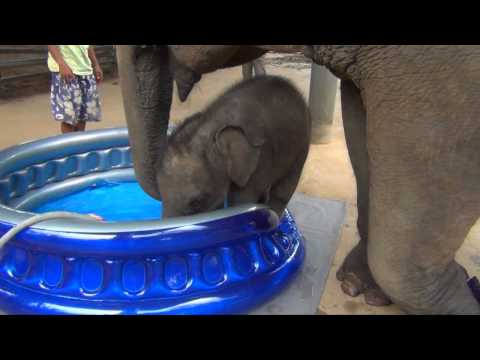 Baby Elephant Bath Time Part2