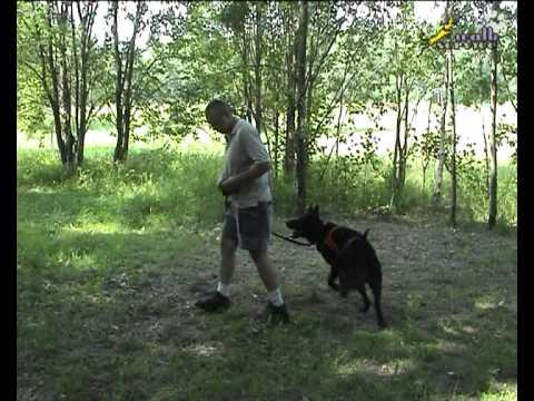 Дрессировка собак  Десять подготовительных базовых упражнений для послушания