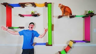 TURNING MY HOUSE INTO A CAT PLAYLAND! (KITTY DREAM HOUSE!)