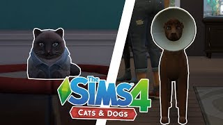 ITS TOO MUCH?! - Sims 4 100 Pet Challenge - Ep.2