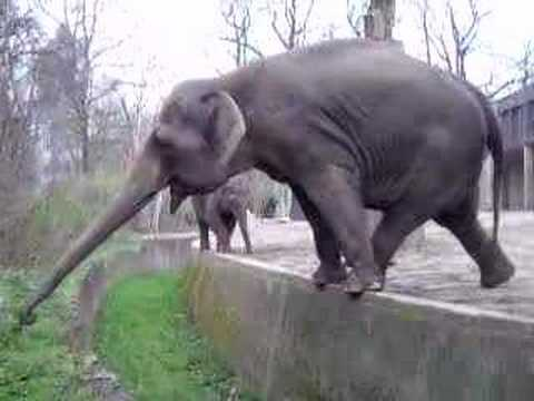 Smart elephant in the Berlin Zoo