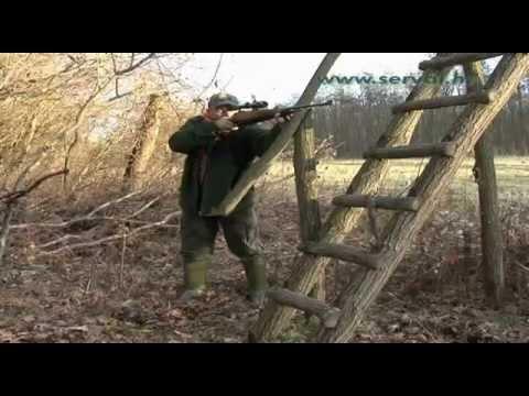 Wild Boar Hunting video