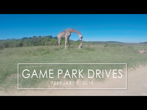 1ST GAME PARK DRIVE IN SOUTH AFRICA | FEBRUARY 8, 2015
