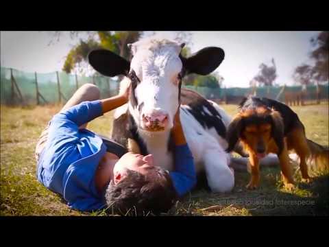 Jeśli Kochasz Zwierzęta, Nie Zjadaj Ich!