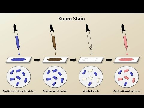 Classification of Bacteria (Antibiotics - Lecture 1)