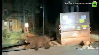 'Good boy': Deputies shoos bear from Dumpster