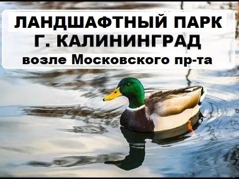 Ботанический сад, Калининград, 01.04.2017г.