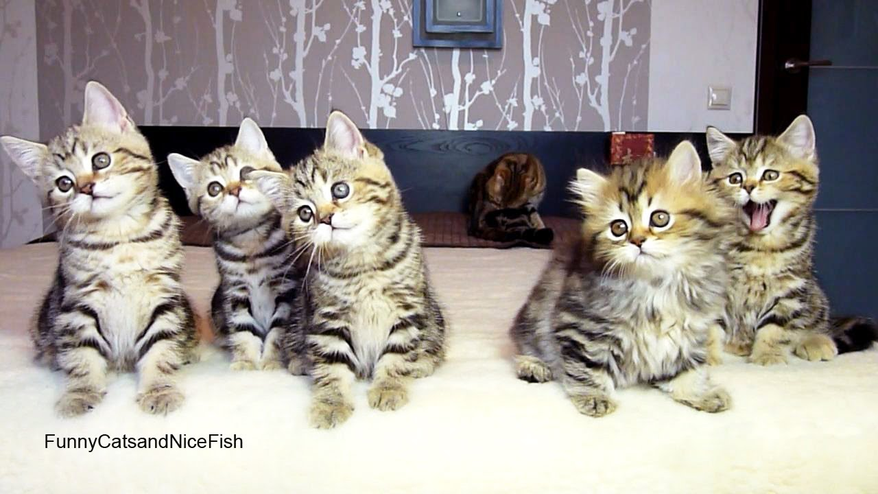 Funny Cats Chorus Line Of Kittens Performs Christmas