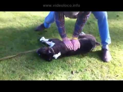 Entrenador resucita a su perro