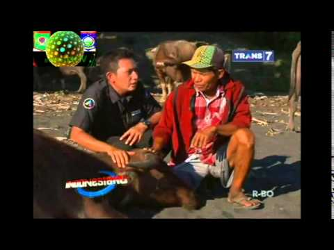 TRANS 7 GUNUNG SANGEANG API-BIMA-NTB-INDONESIA.EP.01 OFF 02