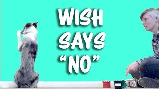 "Wish says ""No"" - Giving dogs a choice -  professional dog training"