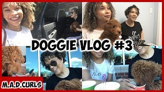 Daily Vlog #5 | Getting Ice Cream WIth Doggie & Vet Checkup